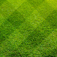 Lawn Care Harrow Weald
