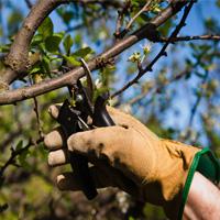 Tree Pruning Harrow Weald