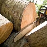 Tree Removal Harrow Weald